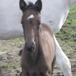 2014 filly Northern Quest Blue Sea by Sea Lion