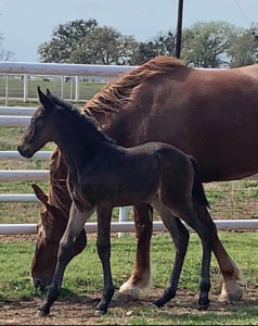 Rooney 2019 filly by Sea Lion
