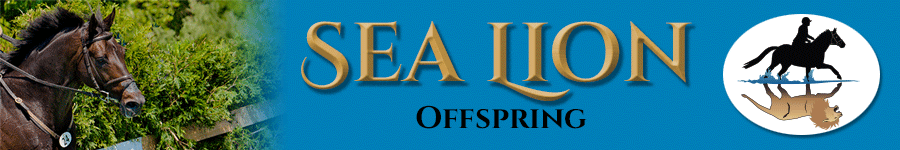 SeaLion-header-web_900-offspring